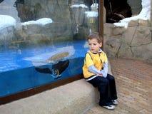 男孩和企鹅 免版税库存图片