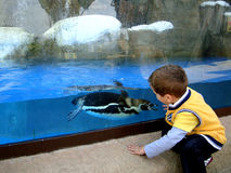 男孩和企鹅 免版税库存照片