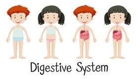 男孩和女孩有消化系统的 向量例证