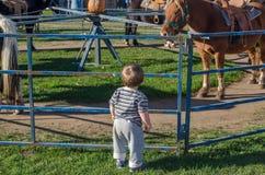 男孩和小马乘驾 库存图片