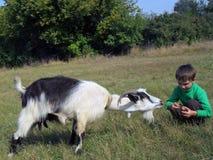男孩和山羊 库存照片