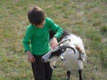 男孩和山羊 库存图片