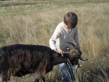 男孩和山羊 免版税图库摄影