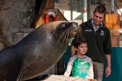 男孩和海狮 免版税库存图片