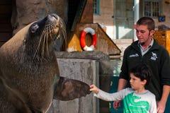 男孩和海狮 库存图片