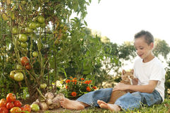 男孩和猫在一个本地出产的蕃茄从事园艺 库存图片