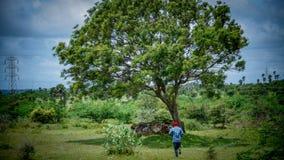 男孩和结构树 库存图片