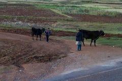 男孩和他的母亲有他们的牛的 免版税库存图片