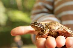 男孩和他的青蛙 库存照片