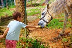 男孩哺养的小马通过在动物农场的篱芭 在马的焦点 免版税库存照片