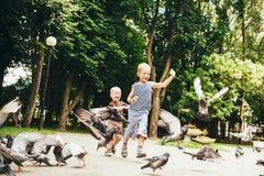男孩哺养的鸽子鸟在公园 免版税图库摄影