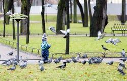 年轻男孩哺养的鸽子 图库摄影