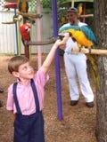 男孩哺养的鹦鹉 免版税库存照片