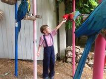 男孩哺养的鹦鹉 图库摄影