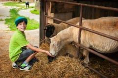 男孩哺养的绵羊 免版税库存照片