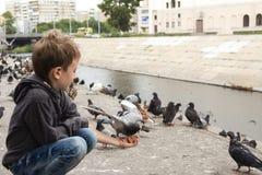 男孩喂养与面包片的傲慢鸽子从他的 免版税库存照片