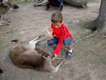 男孩喂养一只袋鼠 澳洲 免版税库存照片
