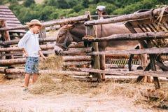 男孩喂养在农场的一头驴 库存照片