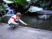 男孩喂养鸟 澳洲 免版税库存照片