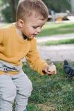 男孩喂养鸽子 免版税图库摄影