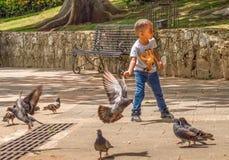男孩喂养鸽子 库存照片
