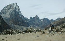 男孩喜马拉雅山搬运程序 免版税库存照片
