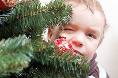 男孩圣诞节查找小的结构树 库存照片
