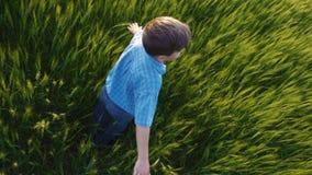 男孩在一块麦田转动并且接触绿色耳朵 影视素材