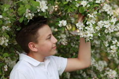 男孩在一棵开花的苹果树下 库存图片