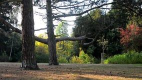 男孩在公园跳在一棵树的backflip 股票录像