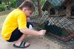 男孩在动物园里用兔子 库存照片