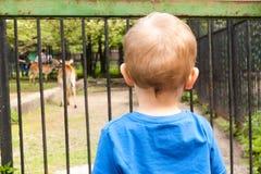 男孩在动物园里 免版税库存图片