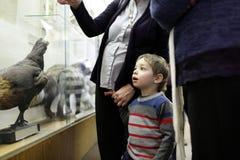 男孩在博物馆 免版税库存照片