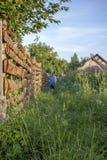 男孩在小径去沿木篱芭的一棵长得太大的草在 库存图片