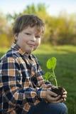 男孩在庭院在种植前敬佩植物 绿色新芽对于儿童手 免版税库存图片