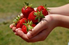 男孩在手上拿着在绿草背景的草莓  免版税库存照片