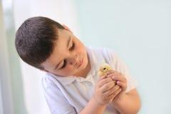 男孩在手边拿着黄色小鸡 免版税图库摄影