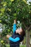 男孩在果树园 免版税库存图片