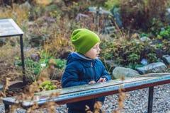男孩在植物园里学习一个标志 免版税库存照片