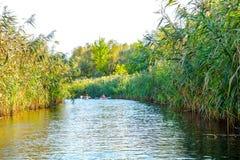 男孩在河的桨独木舟 免版税库存照片