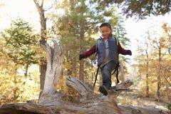 男孩在看的森林里下来,他沿一棵下落的树走 图库摄影