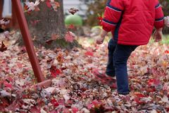 男孩在秋天的踢红色叶子 库存照片