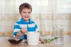 男孩在罐投入植物 免版税库存图片