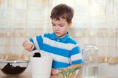 男孩在罐投入植物 免版税图库摄影