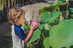 男孩在他的手上拿着一朵莲花 库存图片
