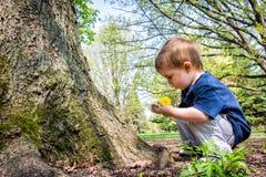 年轻男孩在他的手上的看枝杈 免版税库存图片