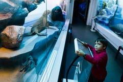 男孩在Grigore Antipa自然历史博物馆 免版税图库摄影