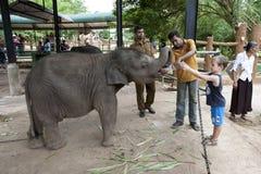 男孩在Pinnawela大象孤儿院(Pinnewala)人工喂养其中一头孤儿大象小牛在斯里兰卡 图库摄影