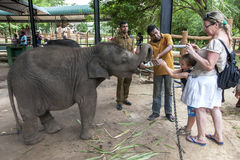 男孩在Pinnawela大象孤儿院(Pinnewala)喂养其中一头孤儿大象小牛在斯里兰卡 库存图片