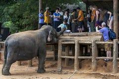 男孩在Pinnewala大象孤儿院(Pinnawela)喂养一头大象在中央斯里兰卡 图库摄影